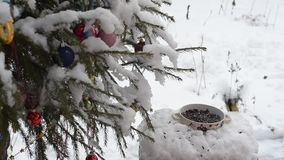 Tit at the feeder in winter snow
