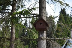 The Tit flying out of the birds house Royalty Free Stock Photos
