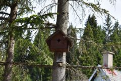 The Tit flying out of the birds house