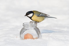 Tit and a glass jar Royalty Free Stock Photo