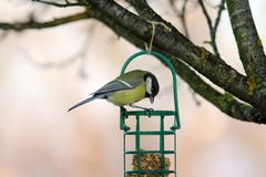 Tit looking at fat feeder Royalty Free Stock Image