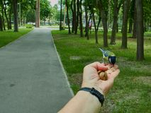 A tit on a man`s hand. Is fed with donut crumbs in a city park royalty free stock photo