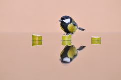 Tit, Parus major. Tit reflected in the water Stock Photo