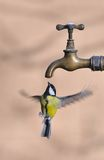 Tit to tap. Tit flying to a tap for drinking Stock Photo