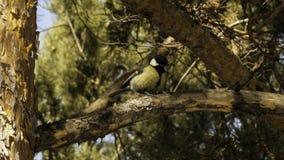 tit Un uccello su una filiale fotografia stock