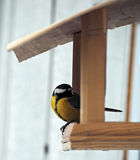 Tit with yellow plumage is sitting at  feeder looking back. Tit with yellow plumage is sitting at the feeder looking back Stock Photos