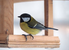 Tit with yellow plumage sitting at wood feeder and going to. Tit with yellow plumage sitting at the wood feeder and going to fly away Royalty Free Stock Photo