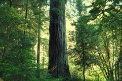 Titaan Del Norte Secret Tree Stock Afbeelding