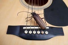 Titan longhorn beetle playing guitar. Titan longhorn beetle on guitar, guitar neck and string with big insect, guitar hero Royalty Free Stock Images