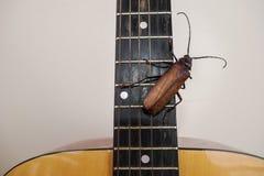 Titan longhorn beetle playing guitar. Titan longhorn beetle on guitar, guitar neck and string with big insect, guitar hero Royalty Free Stock Image