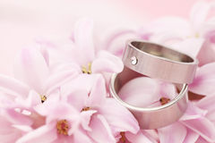 Titanium wedding rings on hyacinth Stock Photo