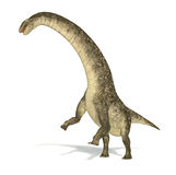 Titanosaurus dinosaur, photorealistic and scientifically correct. Representation. Dinamic view. On white background with drop shadow. Clipping path included Royalty Free Stock Images