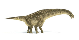Titanosaurus dinosaur, photorealistic and scientifically correct. Representation. Side view. On white background with drop shadow. Clipping path included Stock Photos