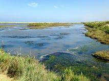 Titchwell-Sumpf-Naturreservat Stockbilder