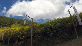 Tithonia diversifolia Hemsl A greaser Na wzg?rzu zbiory wideo