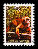 Titi (Callicebinae), Animals; large format serie, circa 1972. MOSCOW, RUSSIA - NOVEMBER 10, 2018: A stamp printed in Umm Al Quwain shows Titi (Callicebinae) royalty free stock image