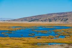 Titicaca湖在普诺的秘鲁秘鲁安地斯 免版税库存照片