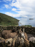 Titicaca lake, bolivia Royalty Free Stock Image