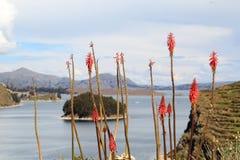 Titicaca's  Sun islands plants Royalty Free Stock Photo