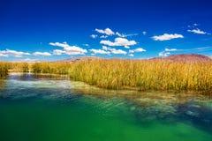 Titicaca-See Schilfe lizenzfreies stockfoto