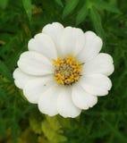 Title flower stock photo