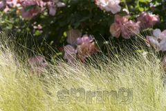 Spring wind. Royalty Free Stock Photo