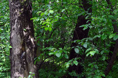Titmouse στο δέντρο Στοκ Φωτογραφίες