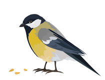 Titmouse Stock Photography