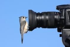 Titmouse auf einer Kamera Lizenzfreie Stockbilder