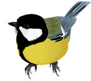 Titmouse bright agile Stock Images