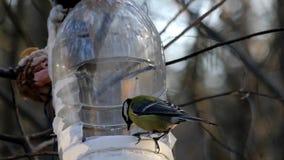 Titmouse dois que come dos alimentadores do pássaro nas madeiras no movimento lento vídeos de arquivo