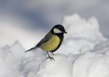 Titmouse en nieve imagenes de archivo