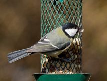 Titmouse on feeder Royalty Free Stock Photography