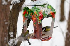 Titmouse and feeder in the winter park stock images