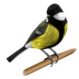 Titmouse illustration Stock Images