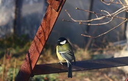 Titmouse, ladder rusty Royalty Free Stock Photos