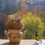 Titmouse, nuthatch, toy Santa Claus, the manger, the window sill. stock images