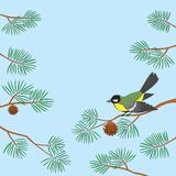Titmouse on pine branch Stock Image