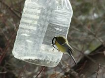 Titmouse sitting on the feeder royalty free stock image