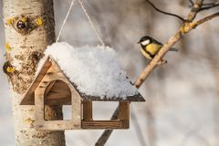 Free Titmouse Sitting Near The Bird Feeders / Little Bird Chickadee Royalty Free Stock Photos - 132358318