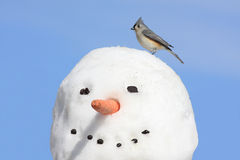 Titmouse On A Snowman Stock Photo