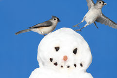 Titmouse On A Snowman Royalty Free Stock Photo
