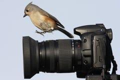 Titmouse sur l'appareil-photo Photos libres de droits
