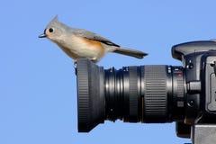 Titmouse sur un appareil-photo image libre de droits