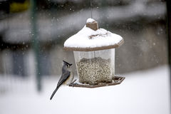 Titmouse on a feeder Stock Photos