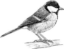 Titmouse Royalty Free Stock Images