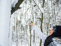 A tits is flying to woman's hand in a winter snowy forest. Stock Photo