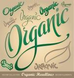 Titoli organici, iscrizione della mano impostata (vettore) Immagine Stock Libera da Diritti