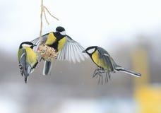 Tits το χειμώνα για να πετάξει και να καθίσει στον τροφοδότη Στοκ εικόνα με δικαίωμα ελεύθερης χρήσης