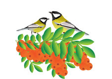 Tits on a branch with sea buckthorn Royalty Free Stock Images